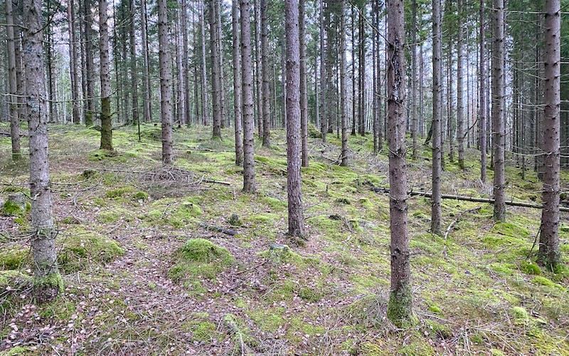 skogsskifte till salu